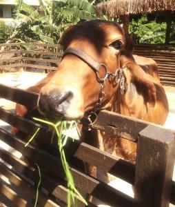 É possível dar comida para os animais na Fazendinha SP (Crédito:  Fabiana Futema/Folhapress)