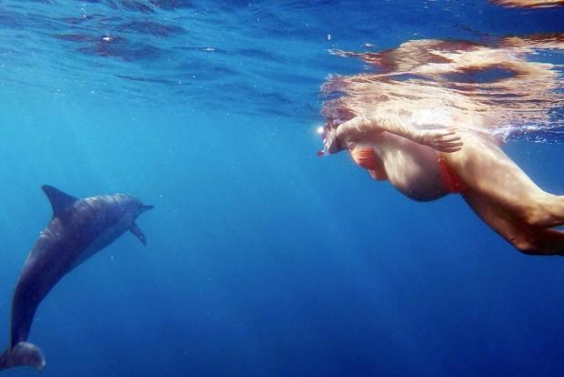 Grávida nada com golfinhos (Reprodução)