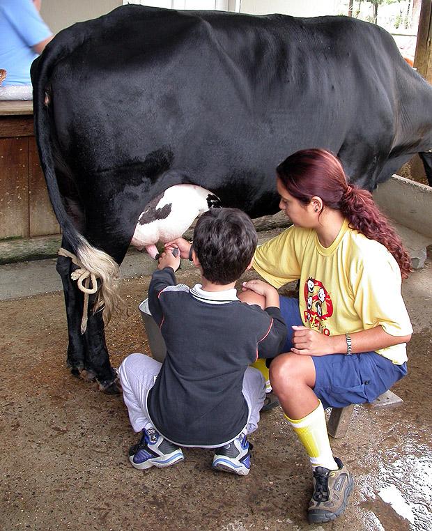 No Mazzaropi, crianças podem tirar o leite da vaquinha (Divulgação)